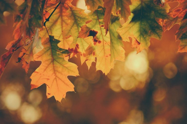 Playlist: Autumn in the city